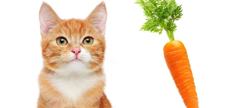 Cat or carrot?  Assessing the privacy risks from algorithmic decisions